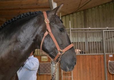 L'amour du cheval